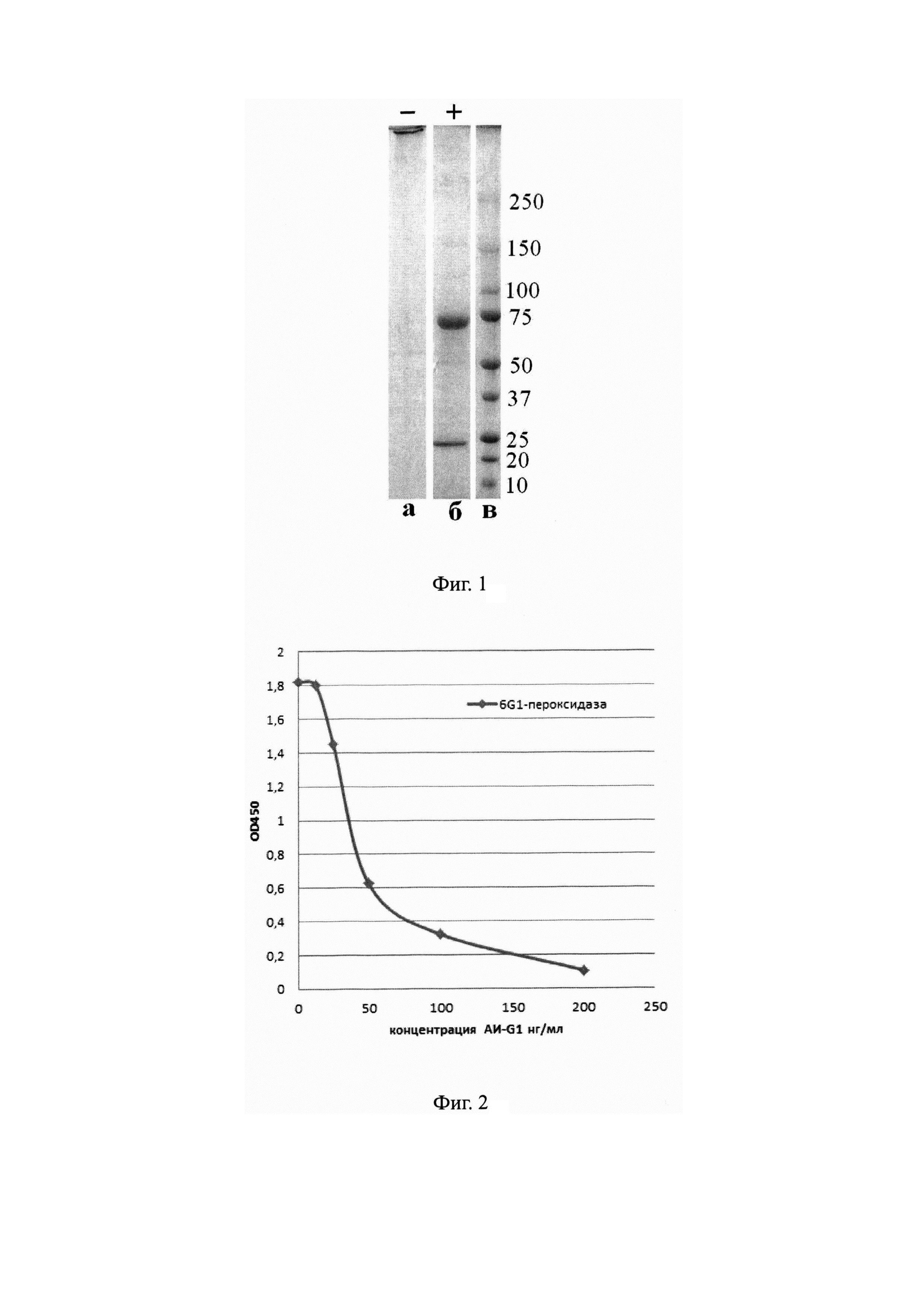 Моноклональное антиидиотипическое антитело аи-g1, обладающее антигенными свойствами морфина