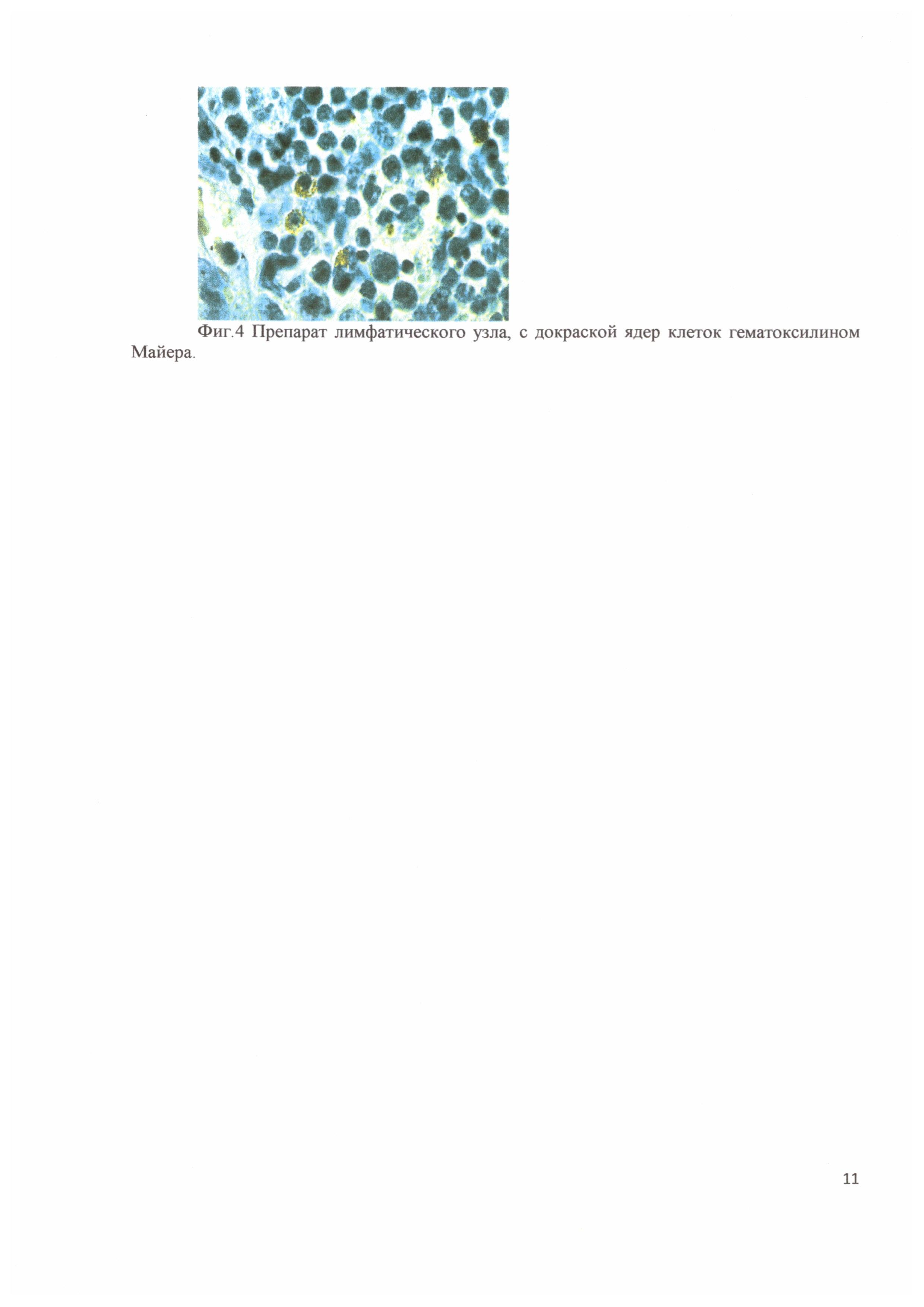 Способ диагностики репродуктивного респираторного синдрома свиней непрямым иммуногистохимическим анализом на основании моноклональных антител