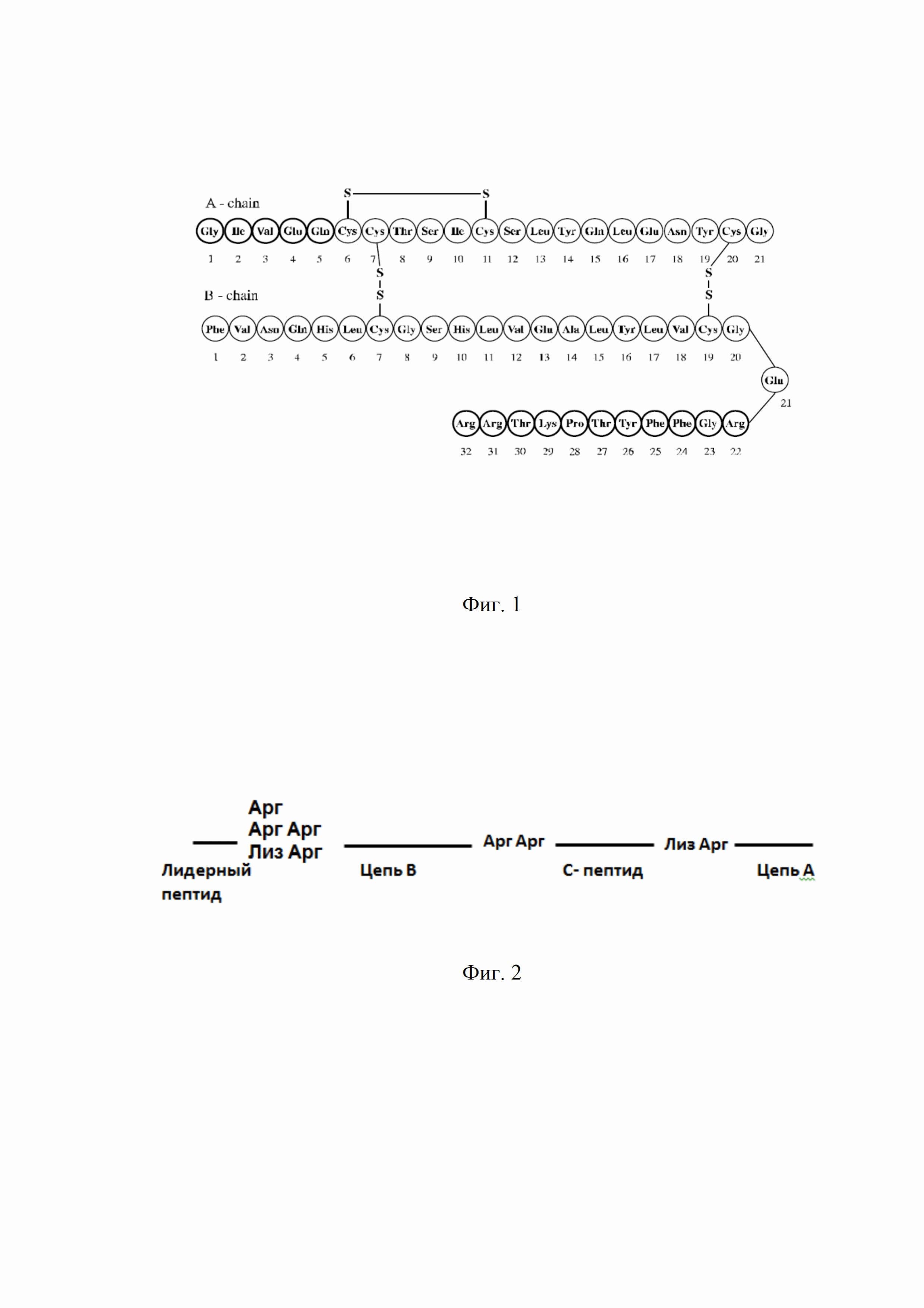 Рекомбинантная плазмидная днк pf644, кодирующая гибридный полипептид, содержащий проинсулин гларгин, и штамм бактерий escherichia coli - продуцент гибридного полипептида, содержащего проинсулин гларгин