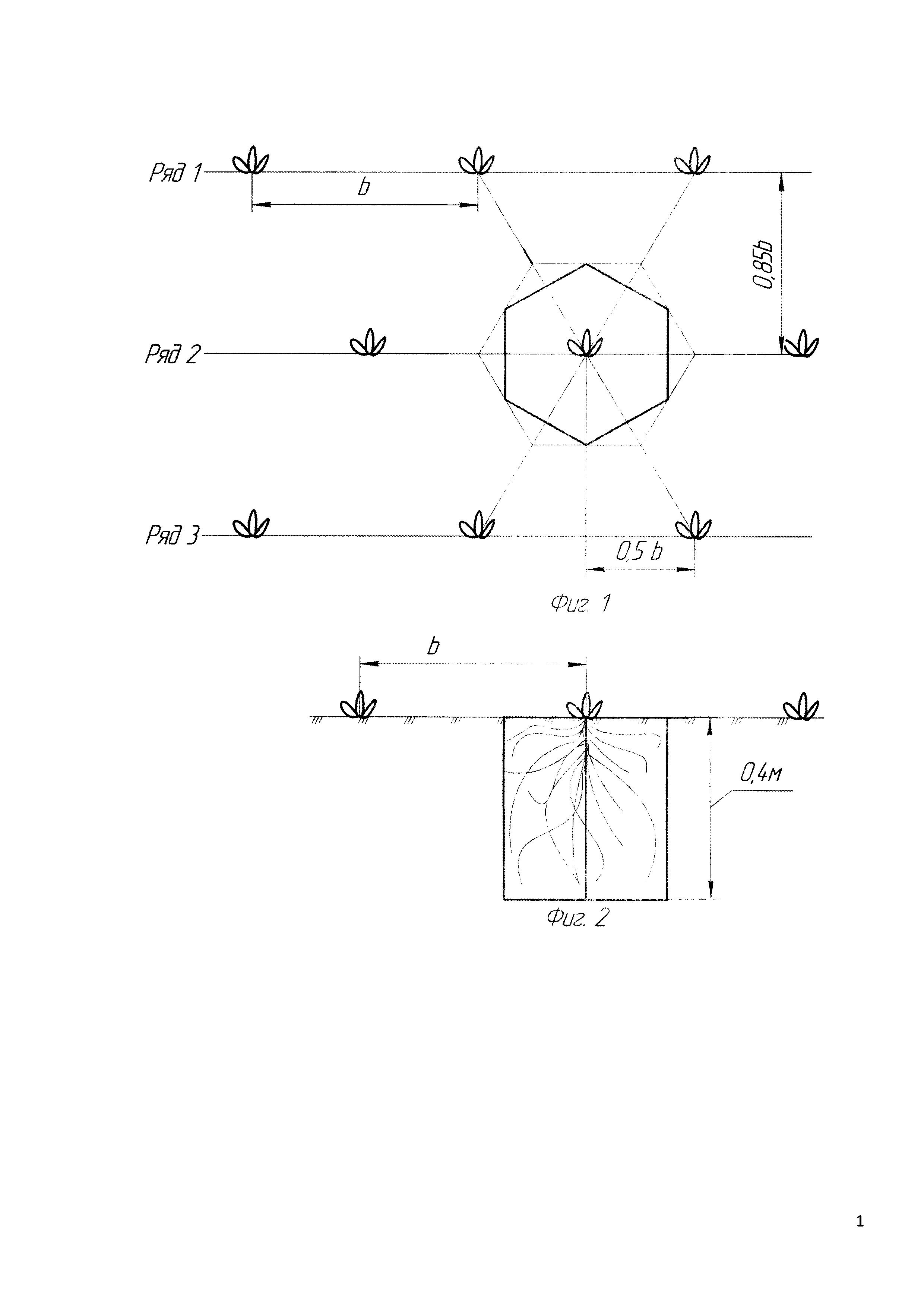 Способ определения размера почвенного питания растений тыквы