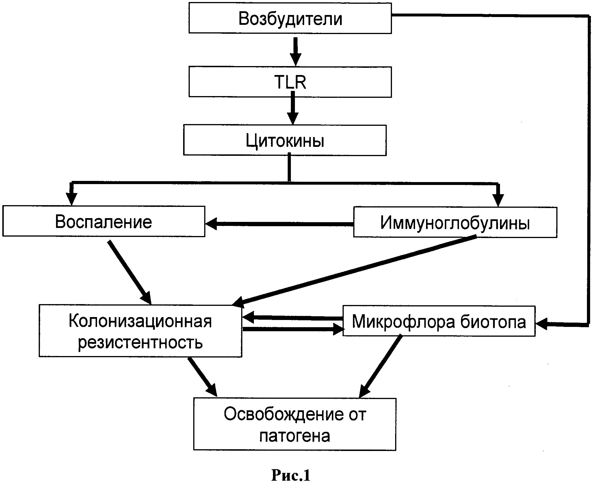 Способ оценки состояния мукозального иммунитета слизистых открытых полостей различной локализации при прогнозировании течения инфекционно-воспалительных процессов и способ коррекции инфекционно-воспалительных процессов