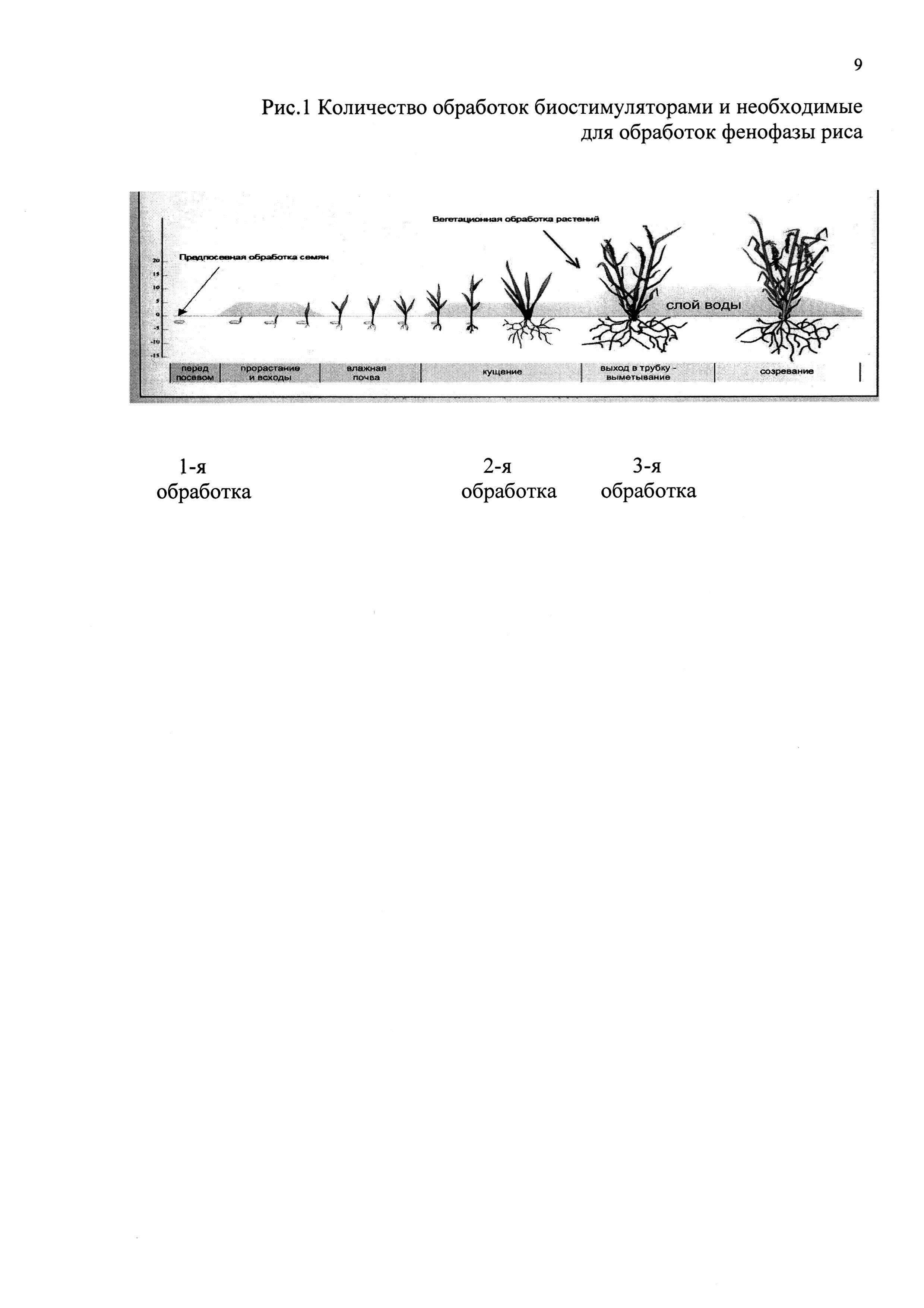Способ выращивания риса при использовании минеральных удобрений и биостимуляторов роста на бурых полупустынных орошаемых почвах