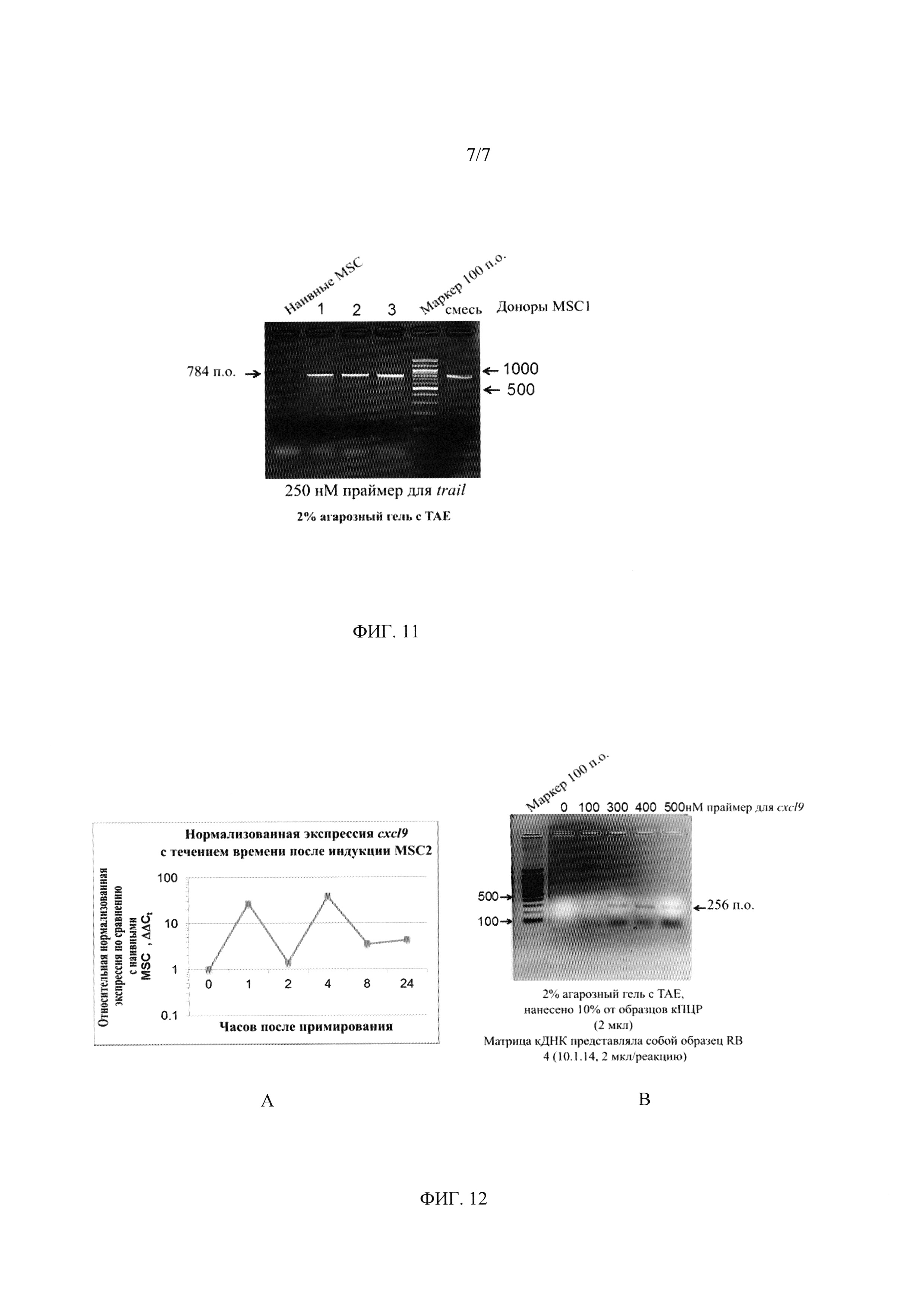 Индукционная среда и способы культивирования стволовых клеток и терапии