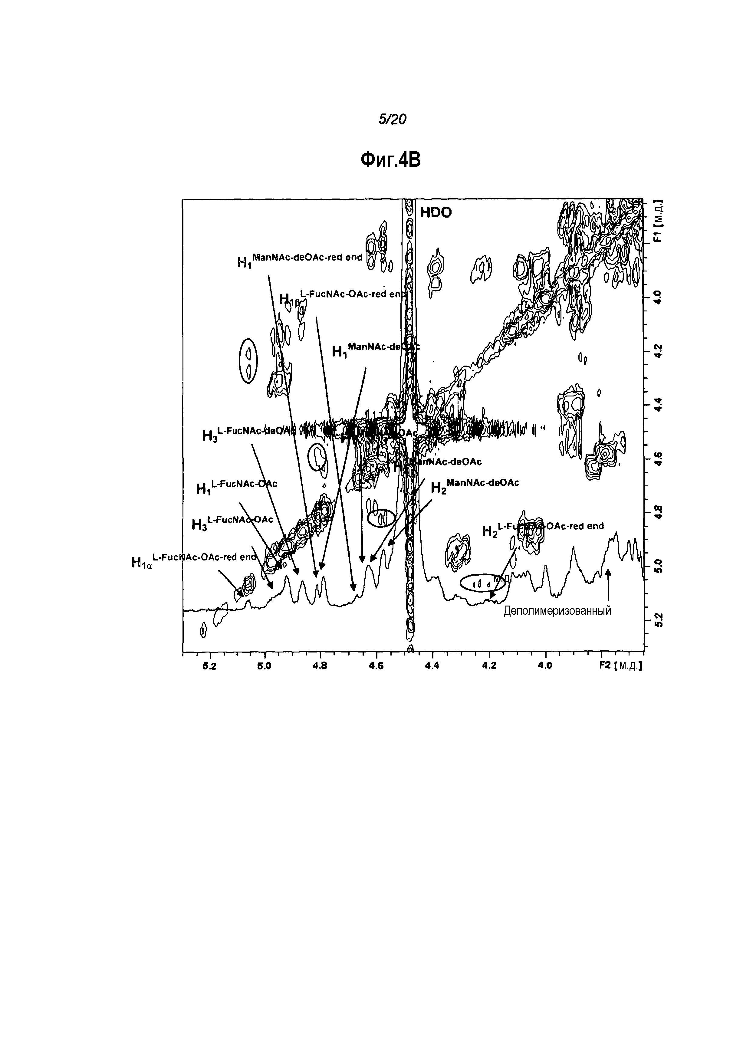 Конъюгация капсульных полисахаридов staphylococcus aureus типа 5 и типа 8