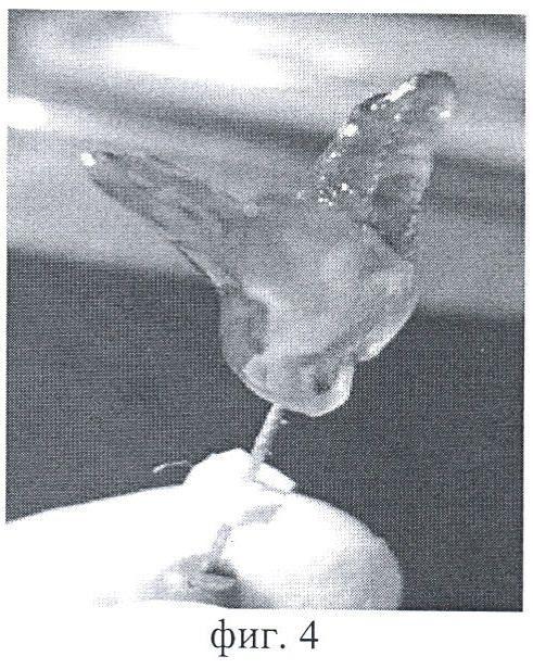 Способ нивелирования оптической плотности дентина удаленного зуба