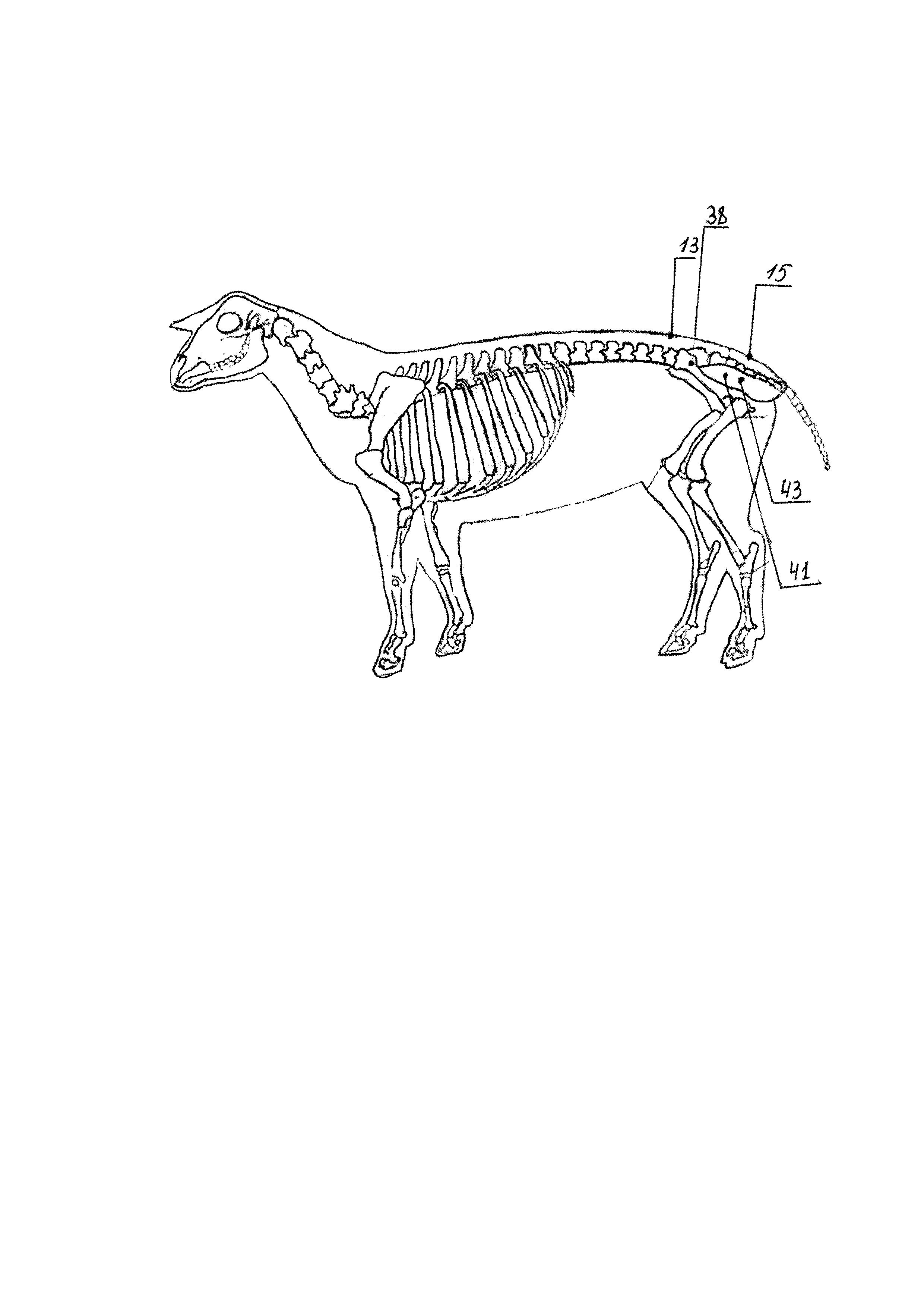 Способ ранней диагностики многоплодия овец